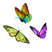 Set of three bright butterflies, full color sketch, hand drawn ink sketch, vector illustration