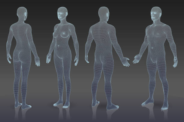 Set of three dimensional bodies. EPS 10. File contain blending object. All lines are not expanded you can change thickness if it is necessary. female likeness stock illustrations