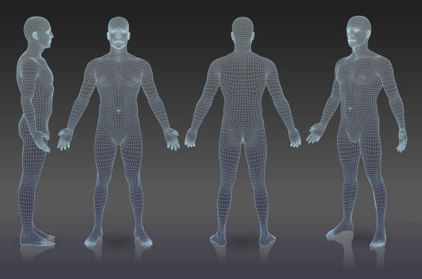 Set of three dimensional people. EPS 10. File contain blending object. All lines are not expanded you can change thickness if it is necessary. human representation stock illustrations