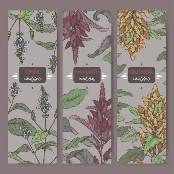 ilustrações de stock, clip art, desenhos animados e ícones de set of three labels with amaranth, quinoa and chia color sketch. cereal plants collection. - quinoa