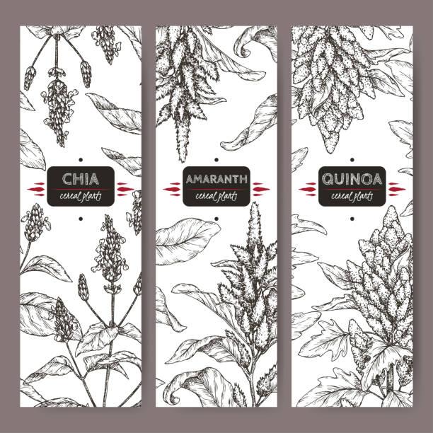 ilustrações de stock, clip art, desenhos animados e ícones de set of three labels with amaranth, quinoa and chia sketch. cereal plants collection. - quinoa