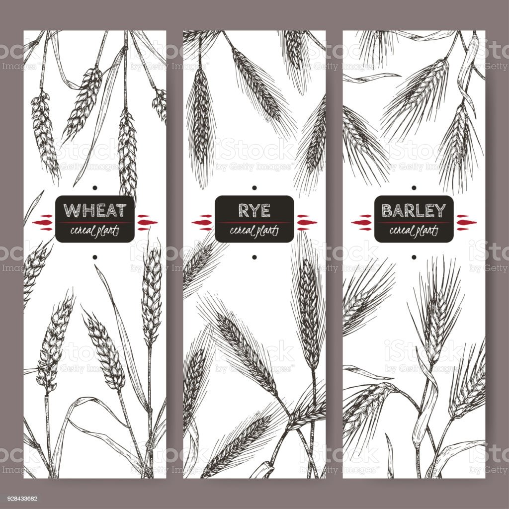 Set of three labels with bread wheat, rye and barley sketch. Cereal plants collection. vector art illustration