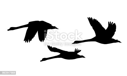 Set of three silhouettes of flying swans - vector, isolated on white background