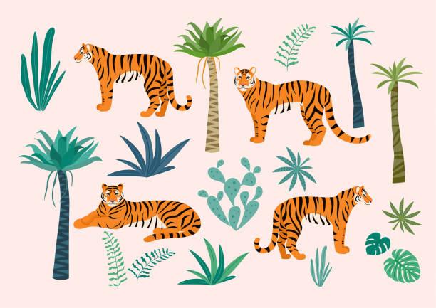 illustrations, cliparts, dessins animés et icônes de ensemble des tigres et des feuilles tropicales. illustration de vecteur. - tigre