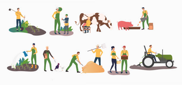 Set of time farming activities Set of time farming activities. People gardening, ranching cattle, harvesting. Farming concept. Vector illustration can be used for topics like agriculture, horticulture, cultivation farmer stock illustrations