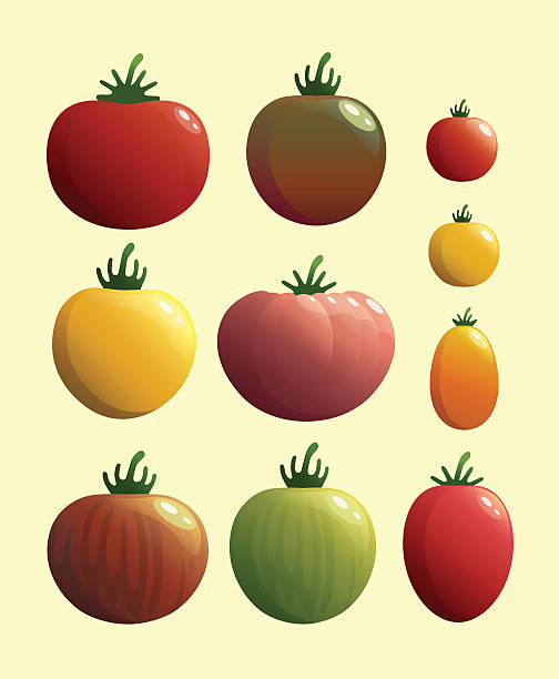 set of tomato.vector illustration. - cherry tomato stock illustrations