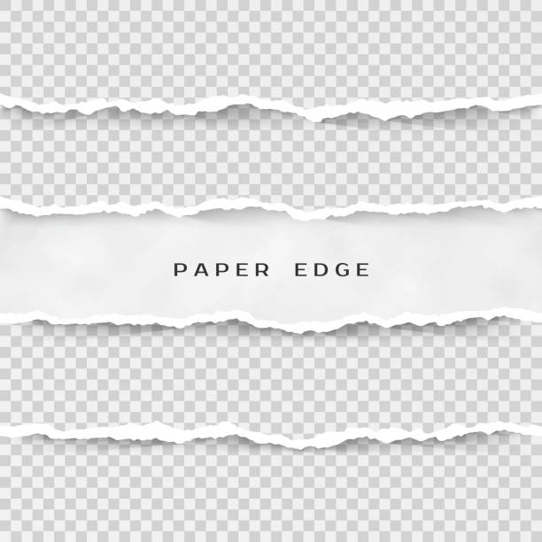 set of torn paper stripes. paper texture with damaged edge isolated on transparent background. vector illustration - at the edge of stock illustrations