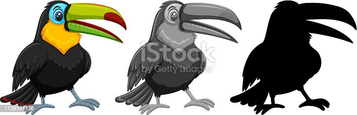Set of toucan character illustration