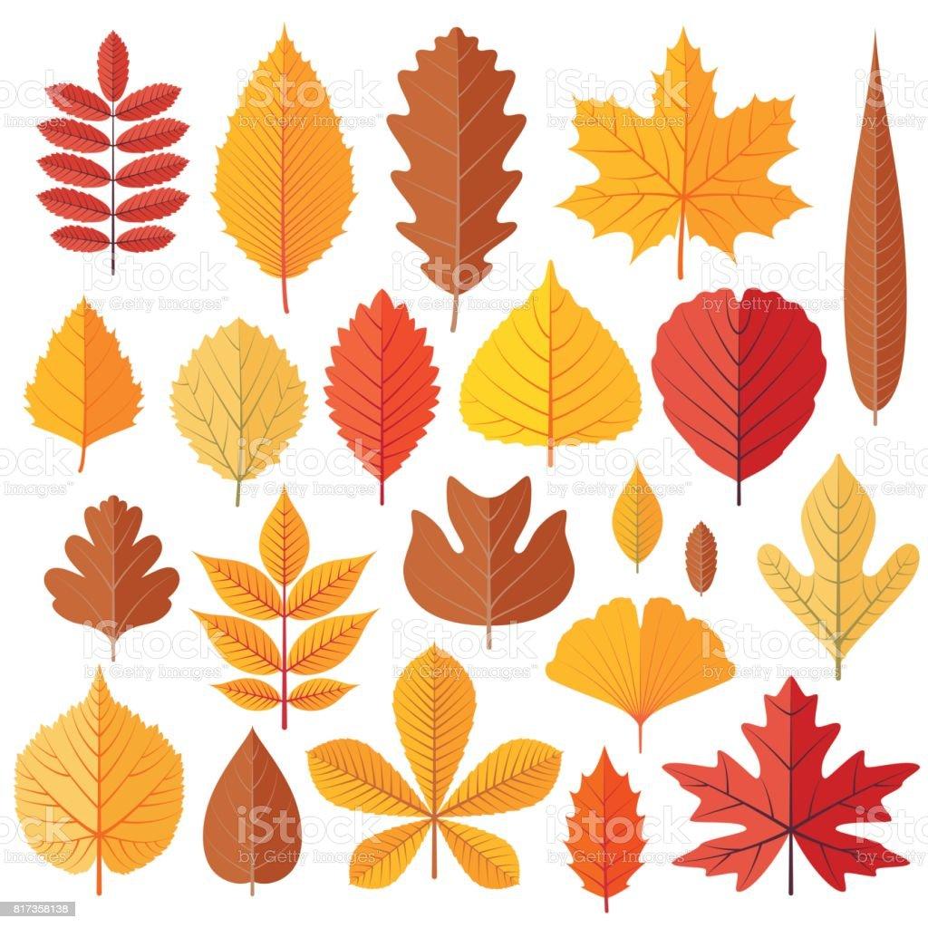 Set of tree autumn leaves isolated on the white vector art illustration