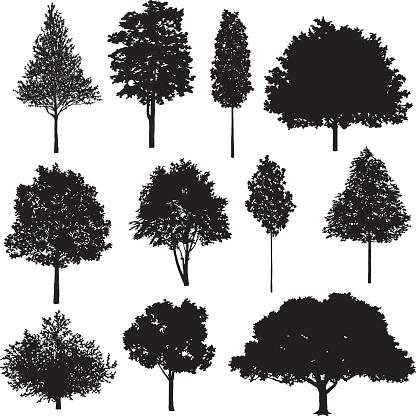 Set Of Tree Drawings