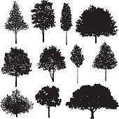 Vector illustration of trees.