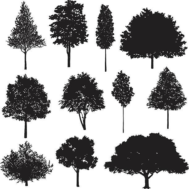 Set Of Tree Drawings vector art illustration
