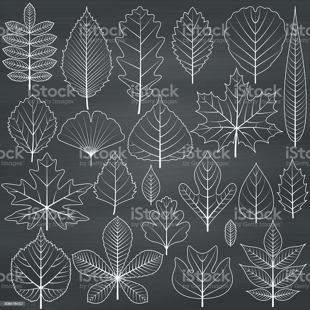 Set of tree leaves on chalkboard background vector art illustration