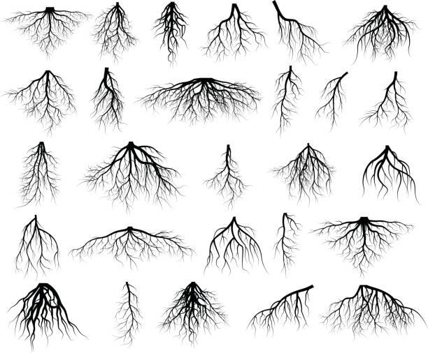 illustrazioni stock, clip art, cartoni animati e icone di tendenza di set of tree roots - radice