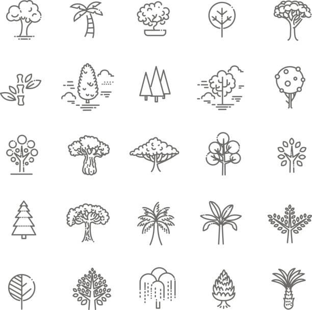 satz von baumform linie vektor-icons - buchenholz stock-grafiken, -clipart, -cartoons und -symbole