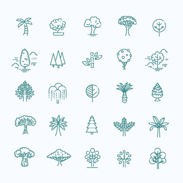 set of tree shape vector line icons - palm tree stock illustrations