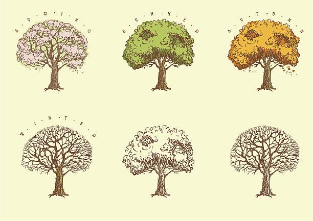 satz von bäumen im gravur. - winterruhe stock-grafiken, -clipart, -cartoons und -symbole