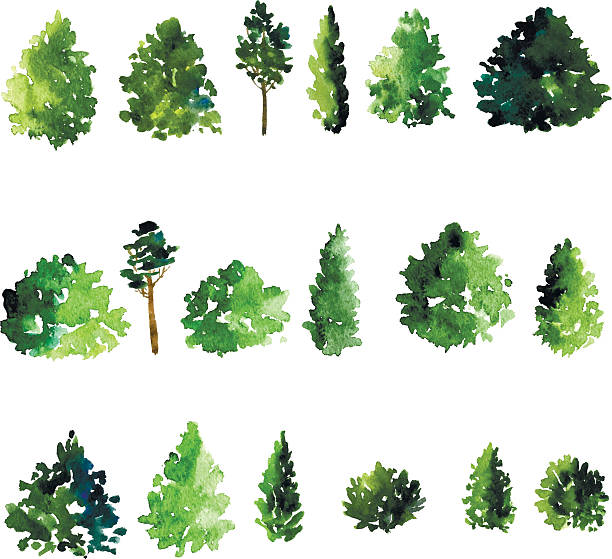 stockillustraties, clipart, cartoons en iconen met set of trees drawing by watercolor - cipres