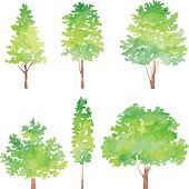 Set Of Trees Watercolor