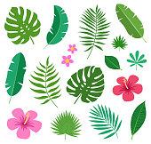 カラフルな熱帯のエキゾチックな植物の葉とプルメリアとハイビスカスは、白い背景で隔離の花のセットです。