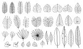 Vector set of tropical leaves. Monstera, banana, palm leaf isolated on white background. Hand drawn foliage. Pack of flat floral elements. Hibiscus flowers. Black and white.