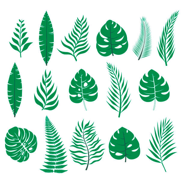 set of tropical leaves/ hibiscus aloha branch leaf collection - jungle stock illustrations