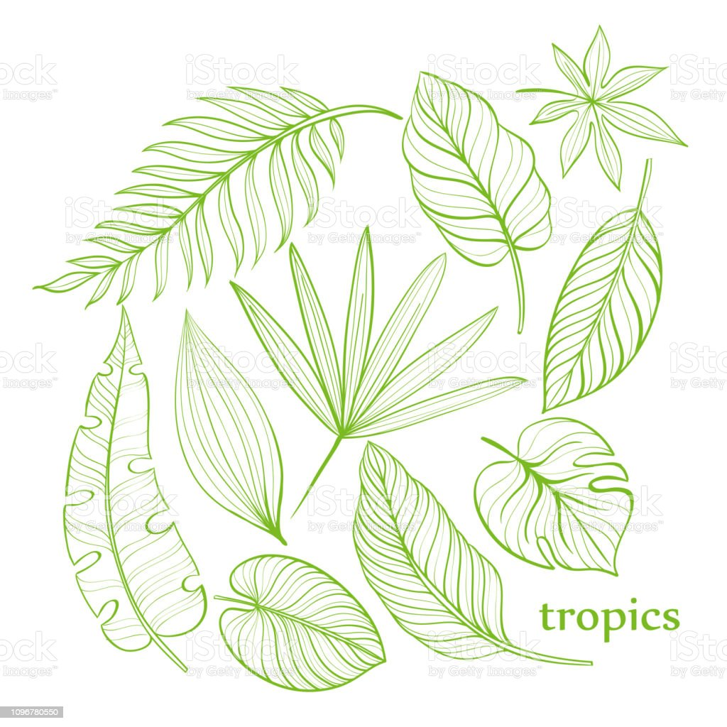 Set Of Tropical Leaves Line Drawing Handdrawn Illustration Stock Illustration Download Image Now Istock You can edit any of drawings via our online image editor before downloading. set of tropical leaves line drawing handdrawn illustration stock illustration download image now istock