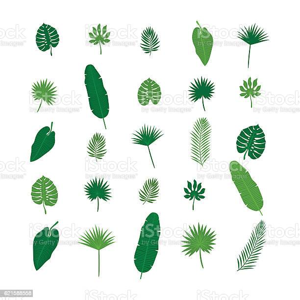 Set of tropical leaves nature elements for your design vector id621588558?b=1&k=6&m=621588558&s=612x612&h=onwh7ou8nokrwgeipbvonz95pkt2ypaf3p8ox1himsw=