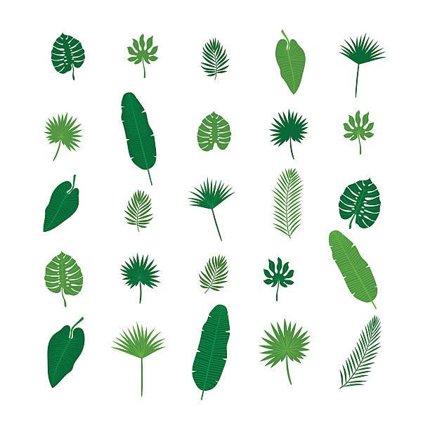 ilustrações, clipart, desenhos animados e ícones de set of tropical leaves. nature elements for your design - coqueiro