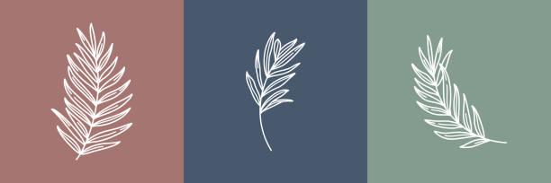 열대 잎 세트입니다. 윤곽 야자수 잎과 올리브 분기 현대적인 미니멀 리스트 스타일로. 벡터 일러스트레이션. - 꽃 식물 stock illustrations