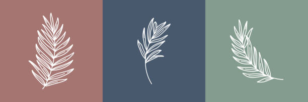 set of tropical leaves. outline palm leaf and olive branch in a modern minimalist style. vector illustration. - botanika stock illustrations
