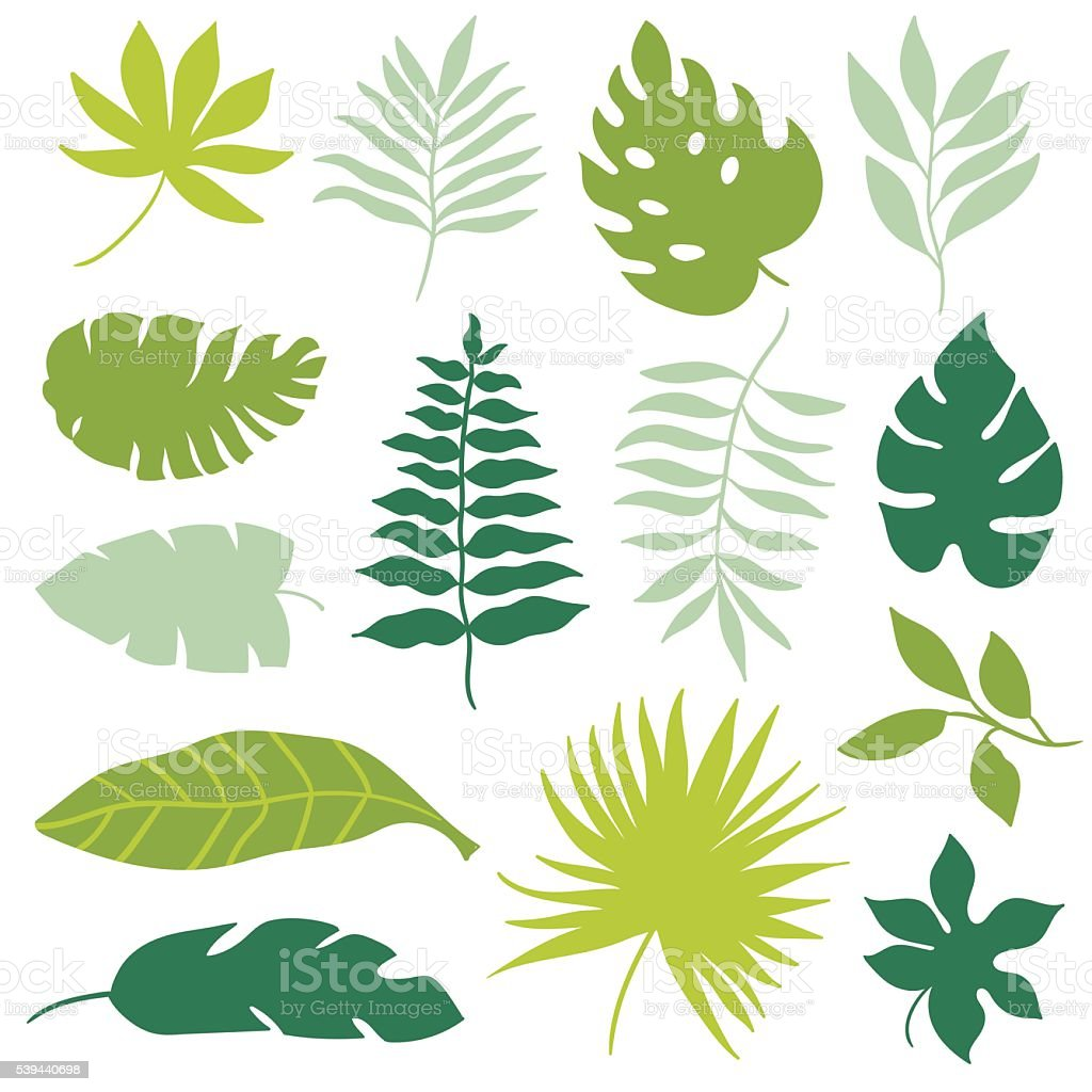 set of tropical leaves vector art illustration