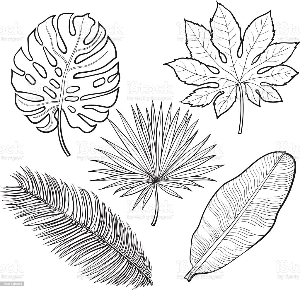 Set Of Tropical Palm Leaves Sketch Style Vector ...  Hawaiian Palm Tree Drawings