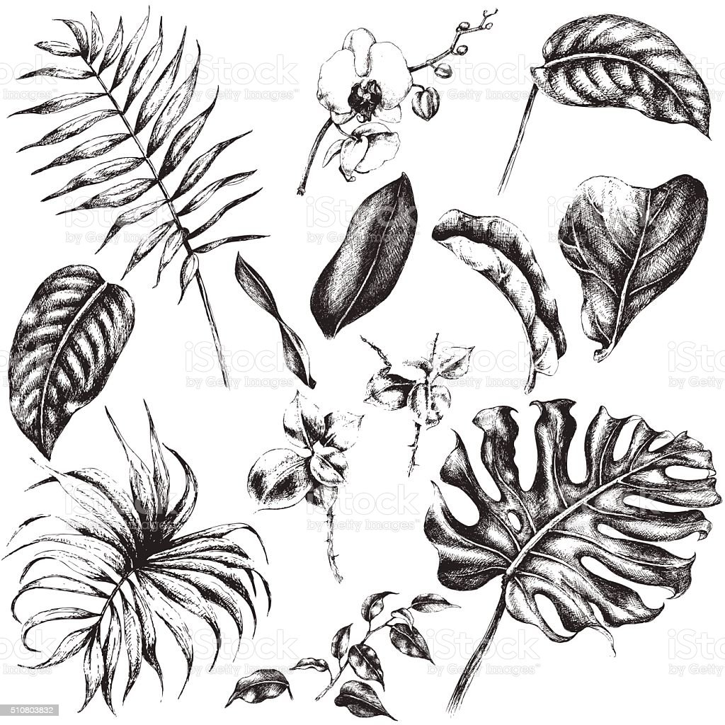 Conjunto de hojas de plantas tropicales. - ilustración de arte vectorial