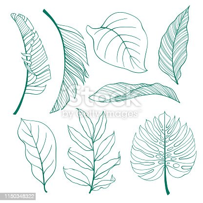 Set of tropical plants leaves. Botanical vector outline. Coconut palm, monstera, banana tree.