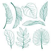 Set of tropical plants leaves.