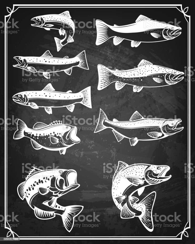 Set of trout, salmon and perch fish icons on grunge vector art illustration