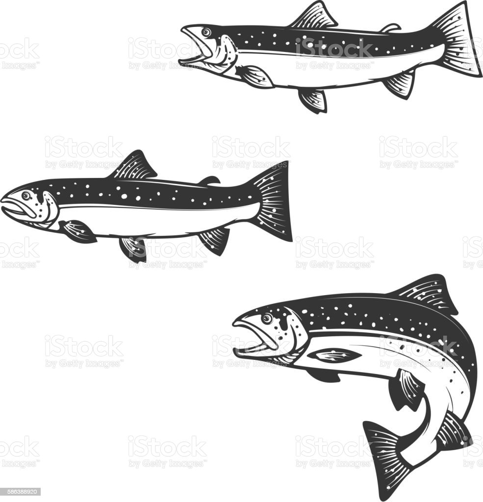 Set of trout silhouettes. vector art illustration