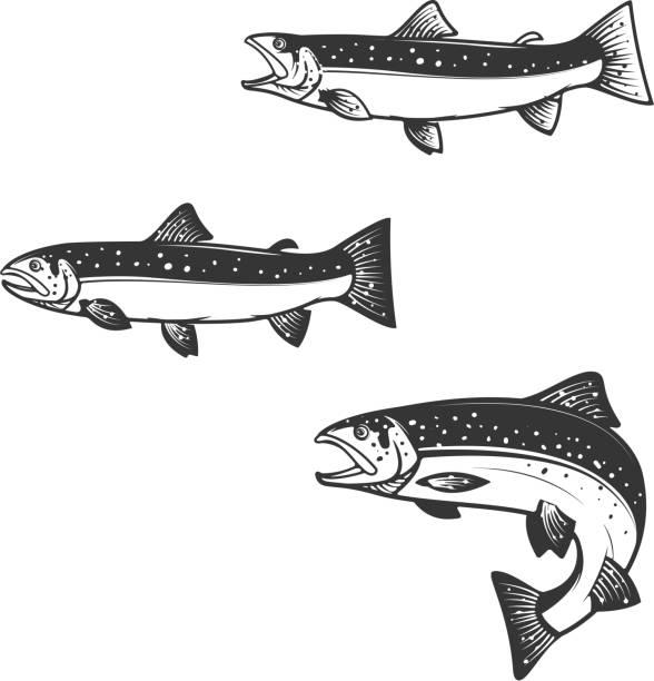 illustrazioni stock, clip art, cartoni animati e icone di tendenza di set of trout silhouettes. - trout