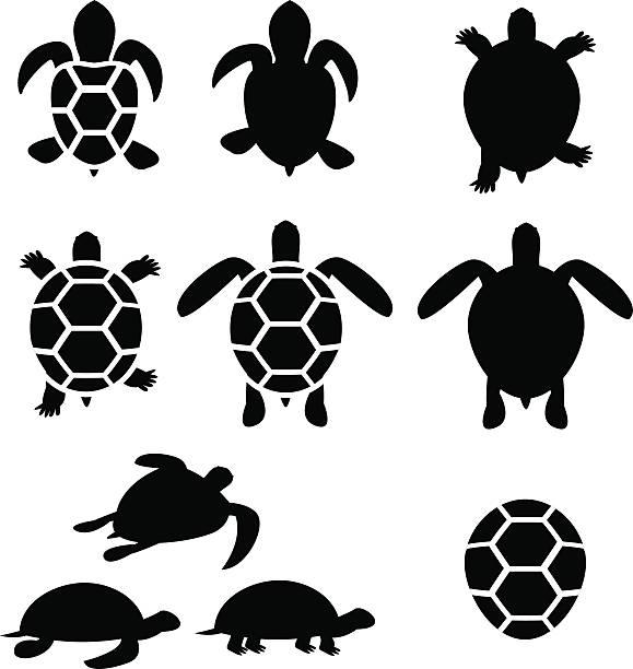 Set of turtle and tortoise silhouette Set of turtle and tortoise silhouette, vector turtle stock illustrations