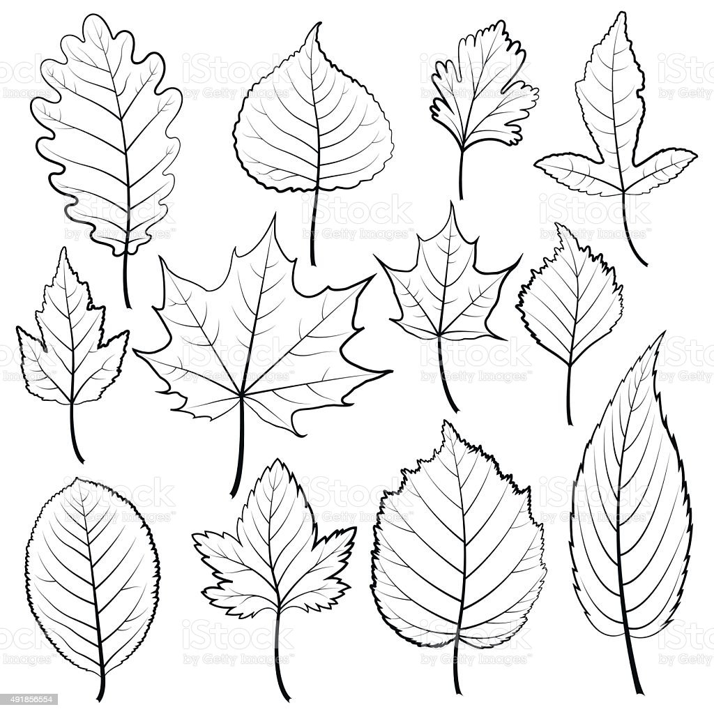 Set Of Twelve Black And White Leaves On A White Background ...