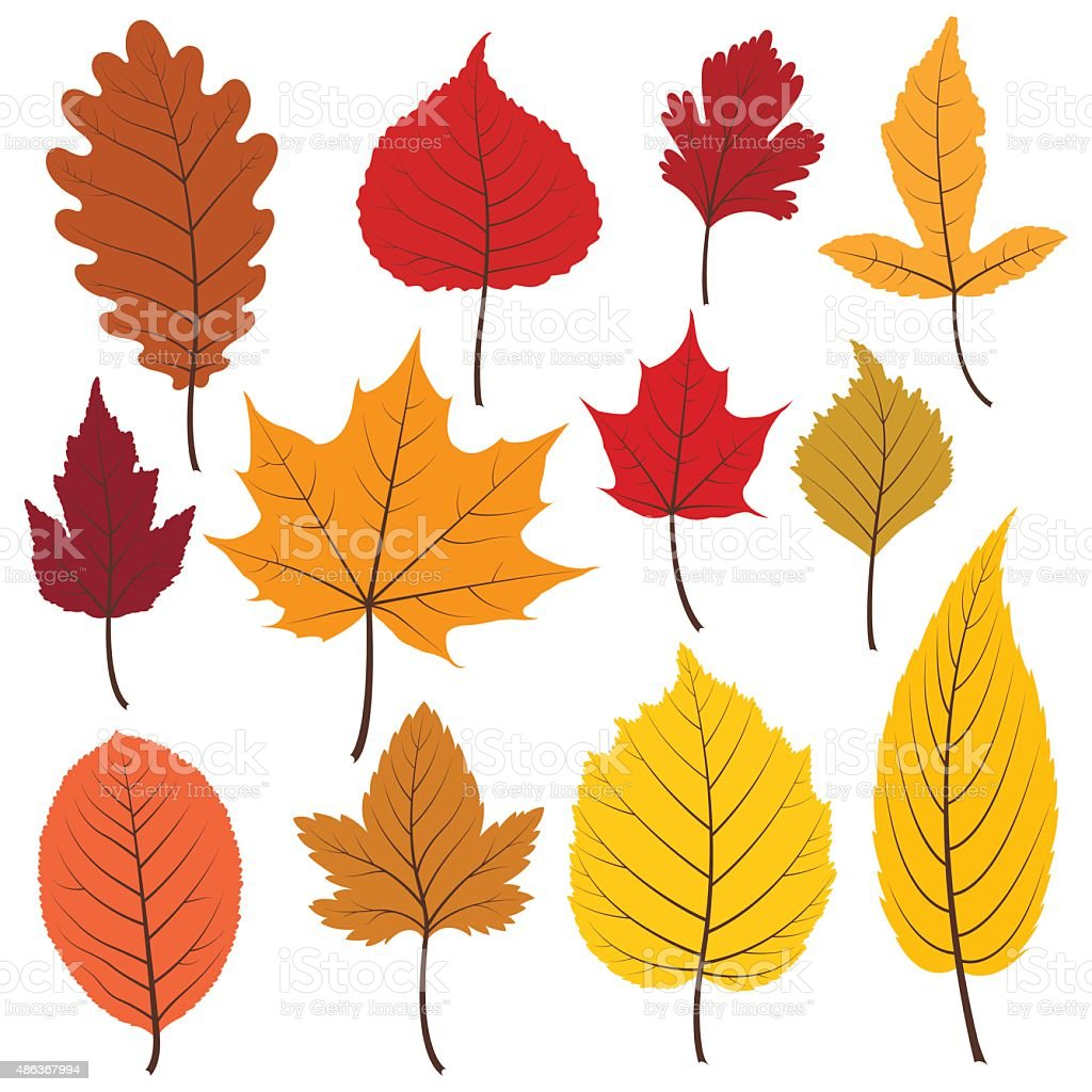 Set of twelve colorful autumn leaves in warm colours. vector art illustration