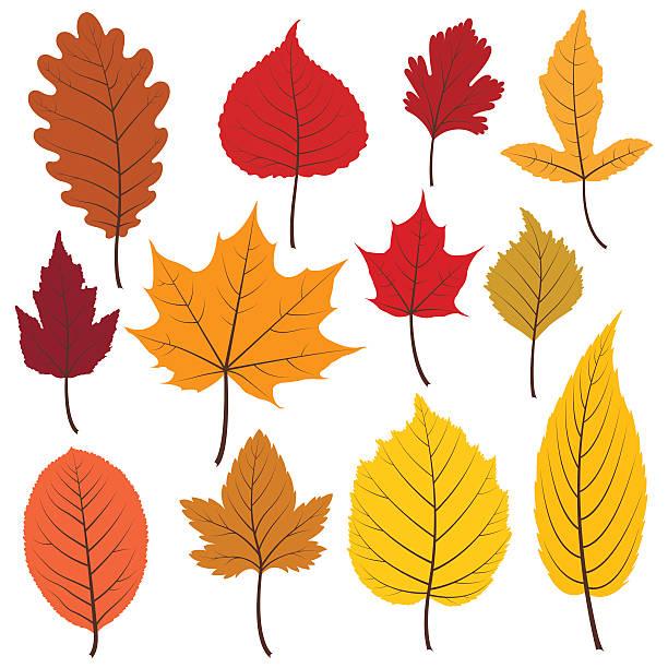Satz von zwölf bunt Herbst Blätter in warmen Farben. – Vektorgrafik