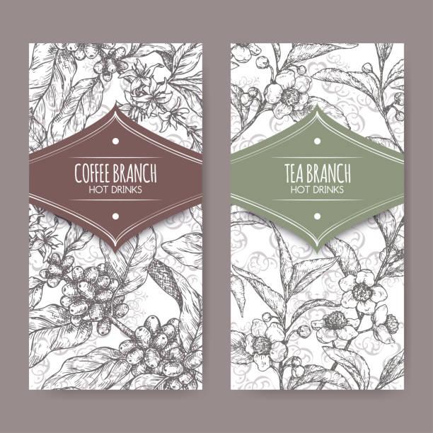 illustrazioni stock, clip art, cartoni animati e icone di tendenza di set of two labels with tea and coffee branch sketch. hot drinks collection. - camellia sinensis
