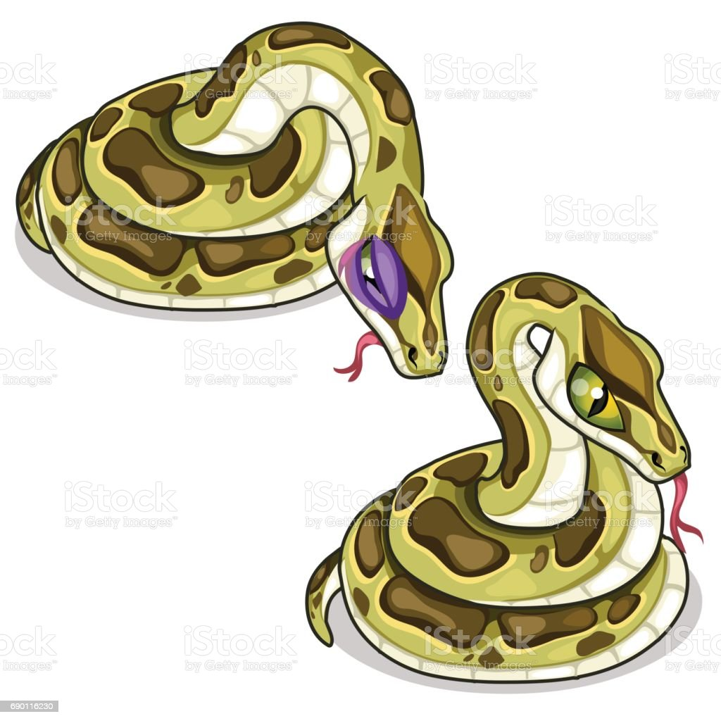 Set of two mesh pythons, one evil, another sick vector art illustration
