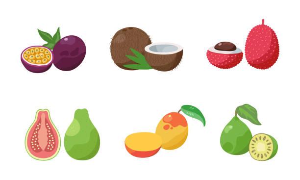 패션 프루트, 코코넛, 열매, 구아바, 망고, 페이조아 2슬라이스 세트. 평면 만화 스타일의 벡터 일러스트레이션입니다. - 잘 익은 stock illustrations
