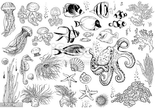 Big set of underwater creatures, corals and tropical fishes. Black and white liner drawing. Vector illustration isolated on white.