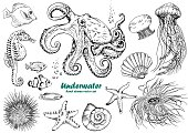 Set of underwater creatures, octopus, jellyfish, starfish, seahorse, sea urchin, shells and tropical fishes.