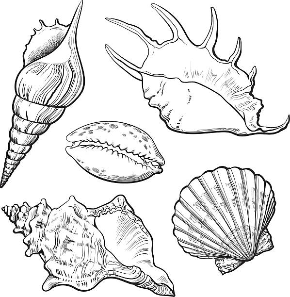 set of various beautiful mollusk sea shells, isolated vector illustration - scallop stock illustrations, clip art, cartoons, & icons