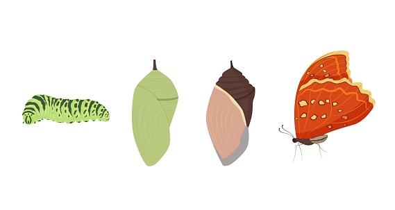 Set of various cartoon butterfly transformation vector graphic illustration